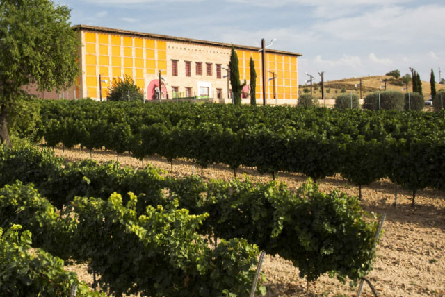 Winery Rueda